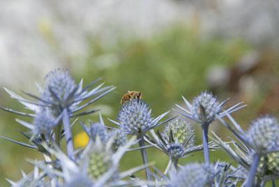 Propolis: Bienenkitt für Menschen?